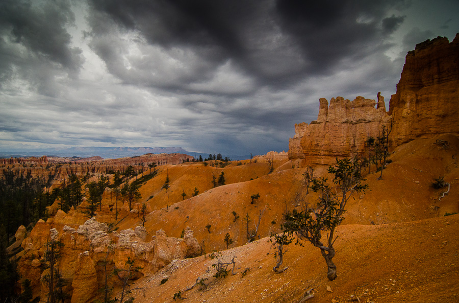 Hoodoos and ancient trees.