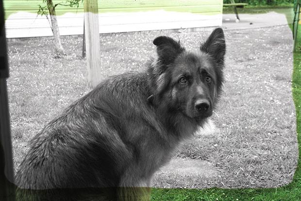 Dog Test