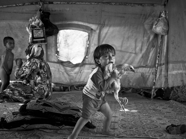 Two-year-old Norshan, a refugee from Hasakeh, Syria, clutches a chicken  inside his family's tent in the town of Arbad, on the outskirts of  Suleymaniyah in Iraqi Kurdistan.  (Moises Saman/Magnum)
