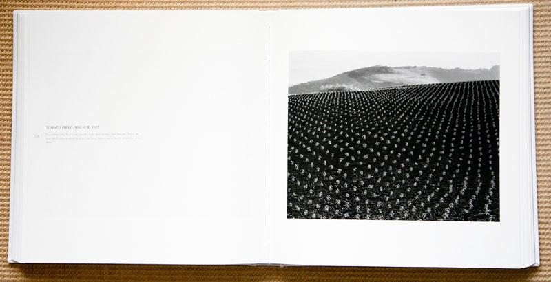 edward_weston_tomato_field_big_sur_1937.jpg