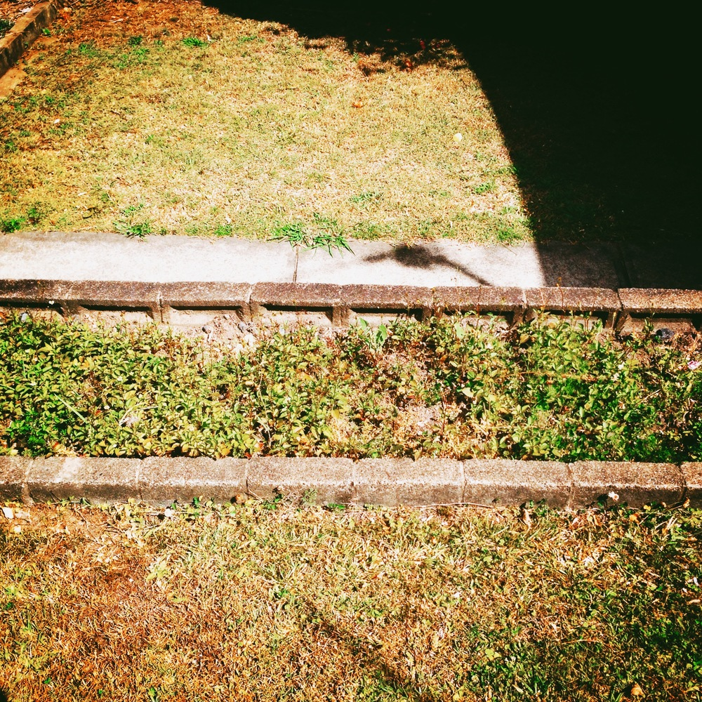 3 My Lawn EKT25.JPG