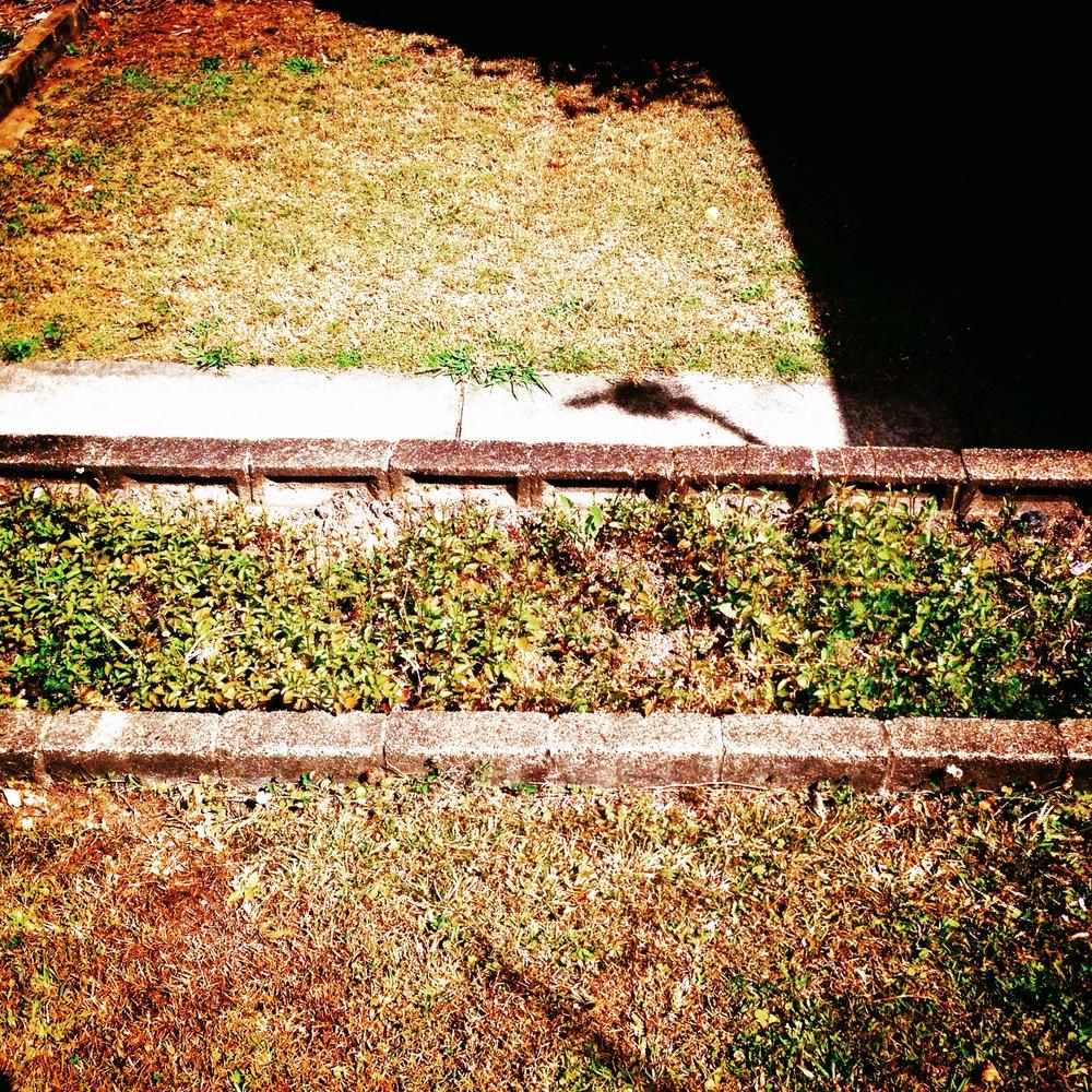 4 My Lawn RVP 50.JPG