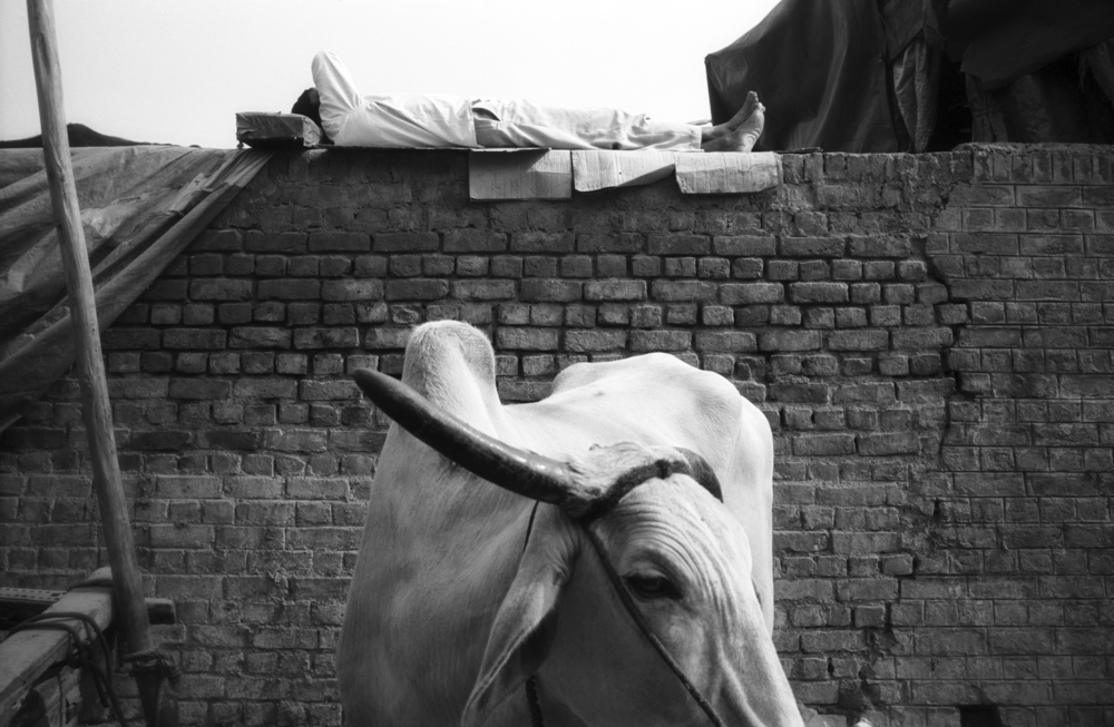 negscan_india_2013.jpg