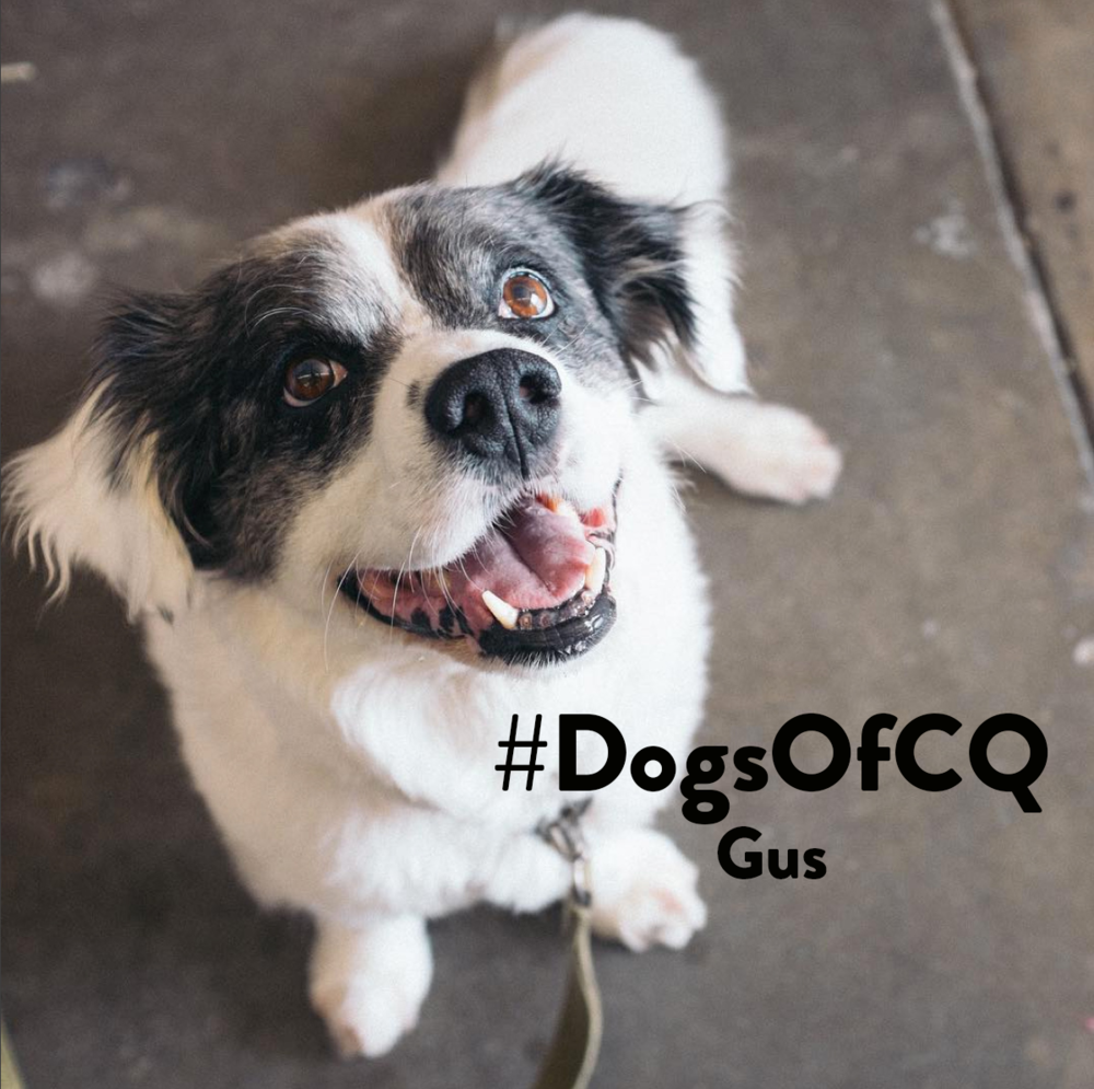 DogsOfCQ_Gus.png