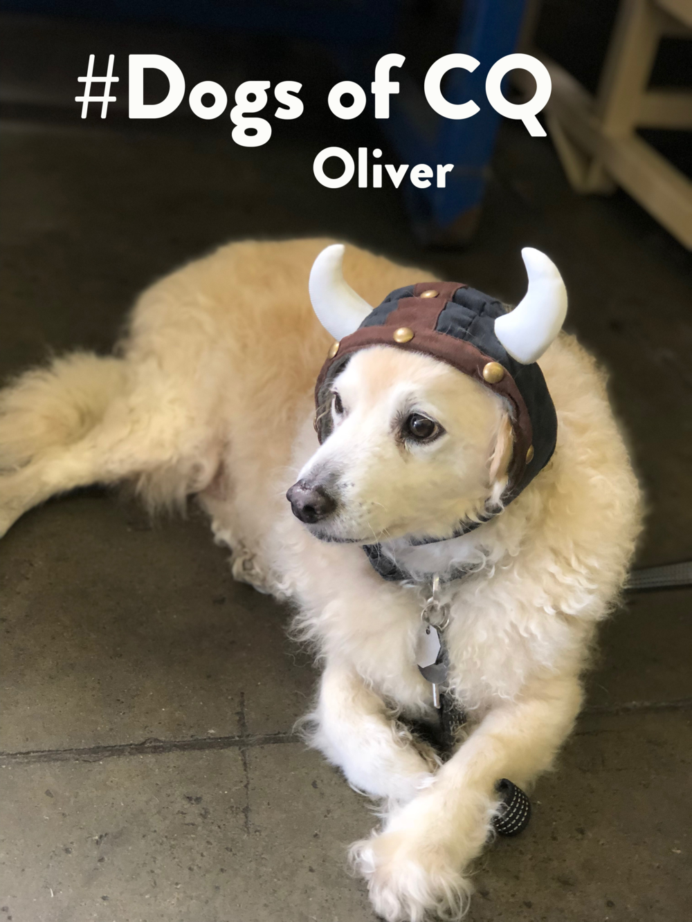 DogsOfCQ_Oliver.png