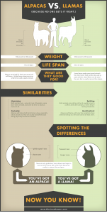 Alpacas vs. Llamas Infographic