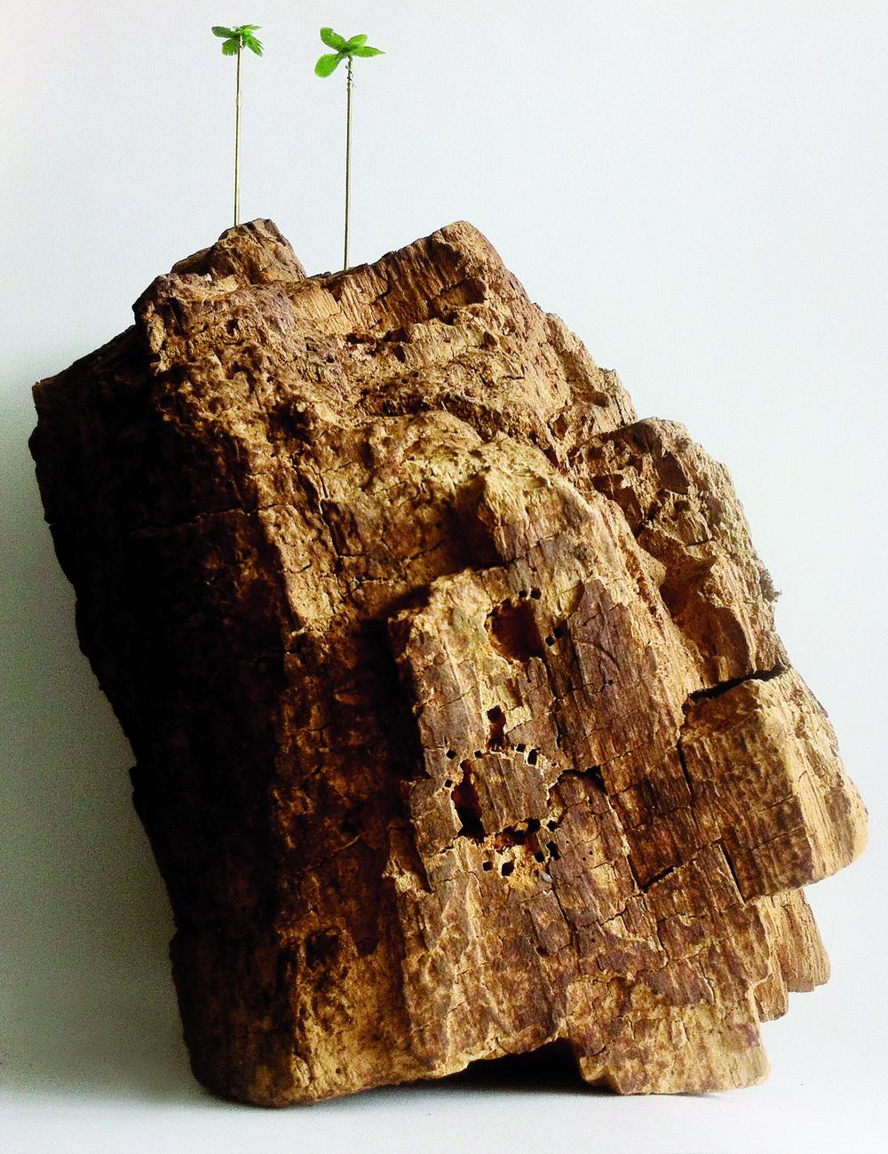 Vergane glorie, 2013, hout, metaal, plastic