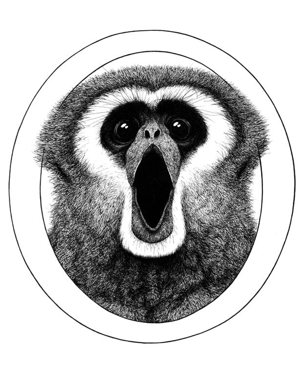 aap_typografie_o_gibbon_animal_typeface_ferdy_remijn_1.jpg