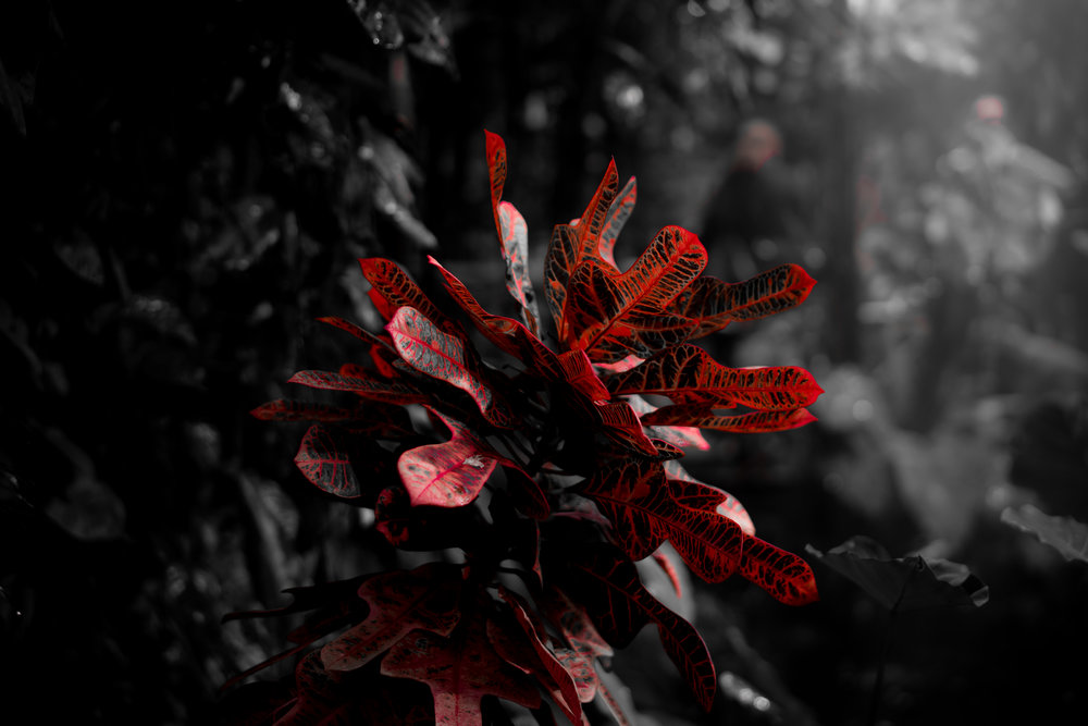 red plant.jpg