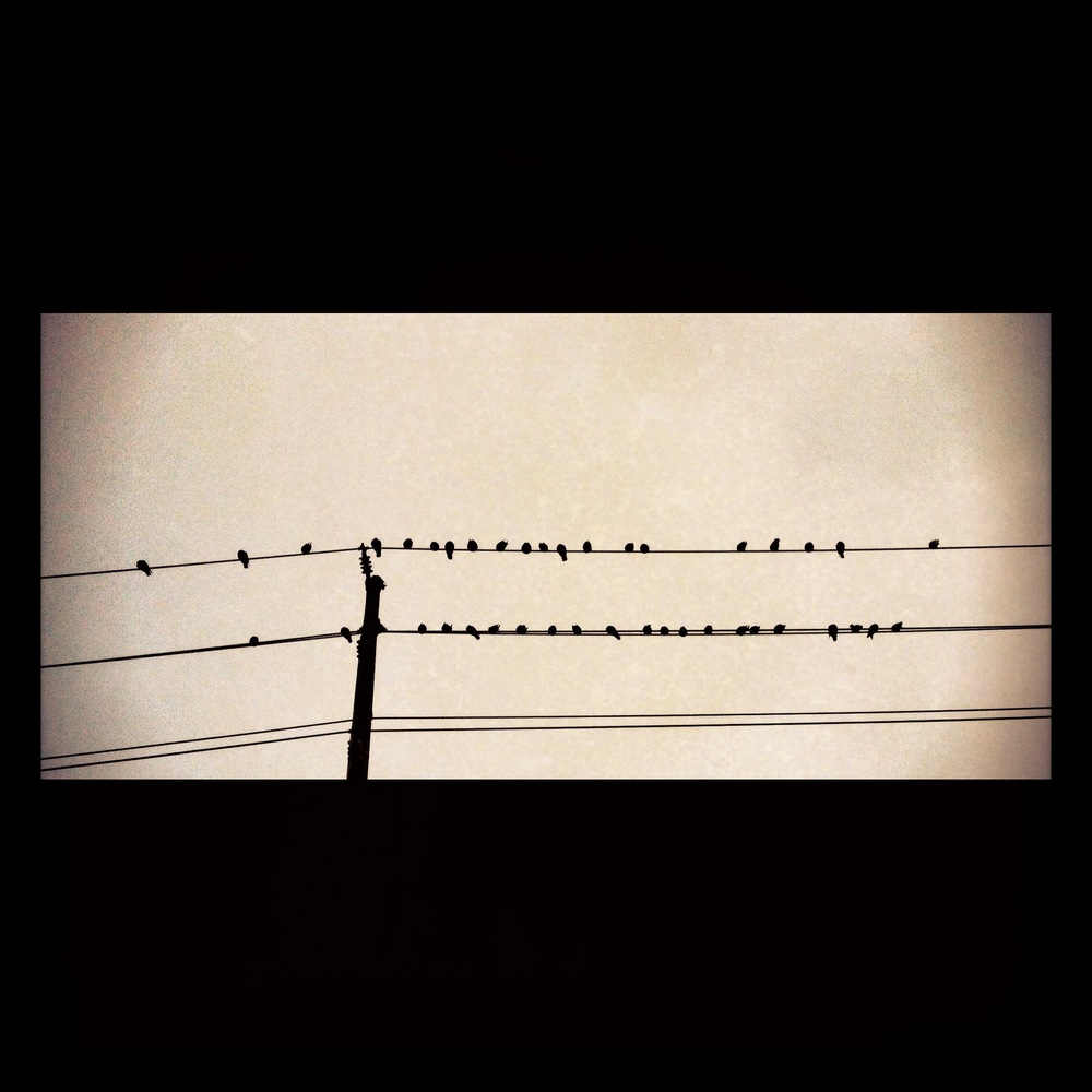 Birds in Rows