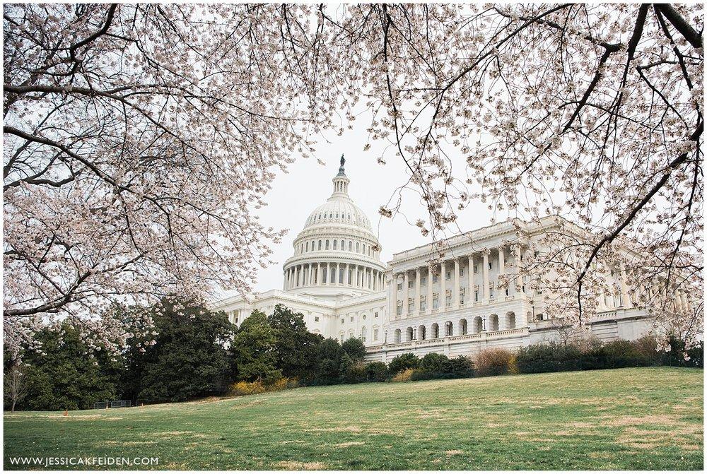 Jessica K Feiden Photography-Washington DC Cherry Blossom Photographer_0003.jpg