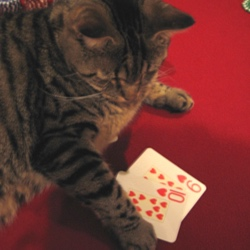i have had two cats - one called elvis (playing cards in this picture - he was very smart!), and the cat I have now, called toto (named after the dog in wizard of oz, of course).