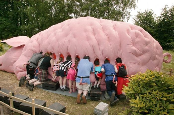 pig installation funny