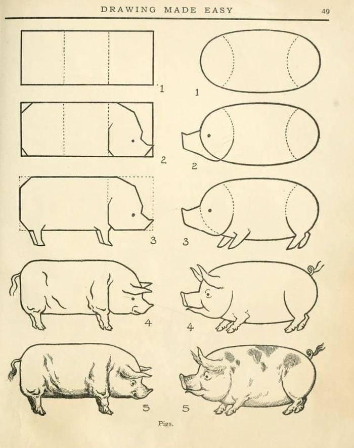 Pig_Day_16.jpg