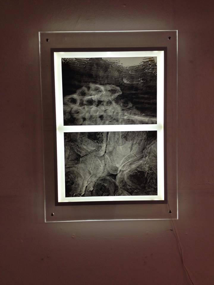 One of the 'X-Rays' series of the forest.