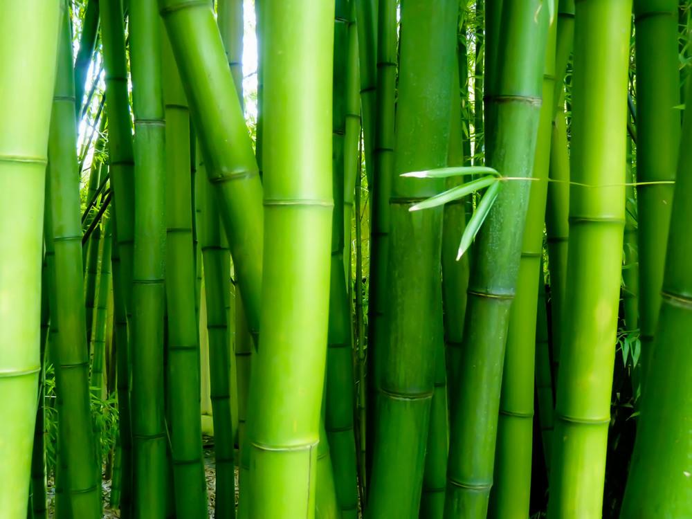 bamboo home page 1500-72?.jpg