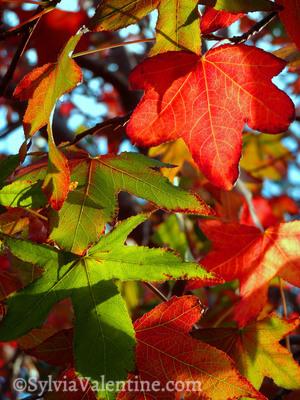 Carmel Fall