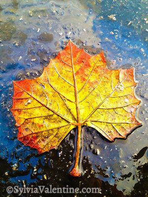 Gold Leaf Rain, CA
