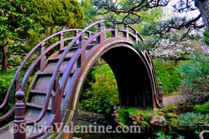 Moon Bridge (Golden Gate Park, CA)