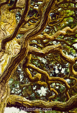 Golden Gate Branches