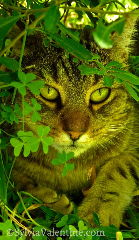 Bindi in the clovers