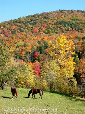 Vermont Horses