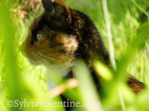Mitzi in the grass