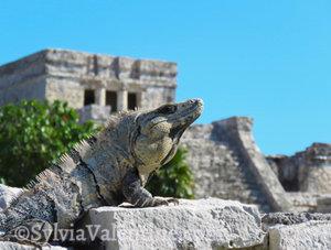 Tulum King, Yucatan, Mexico
