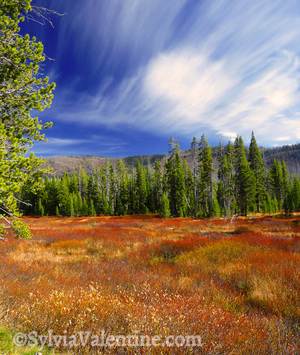 Yellowstone Meadow