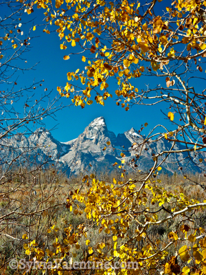 Grant Tetons Fall