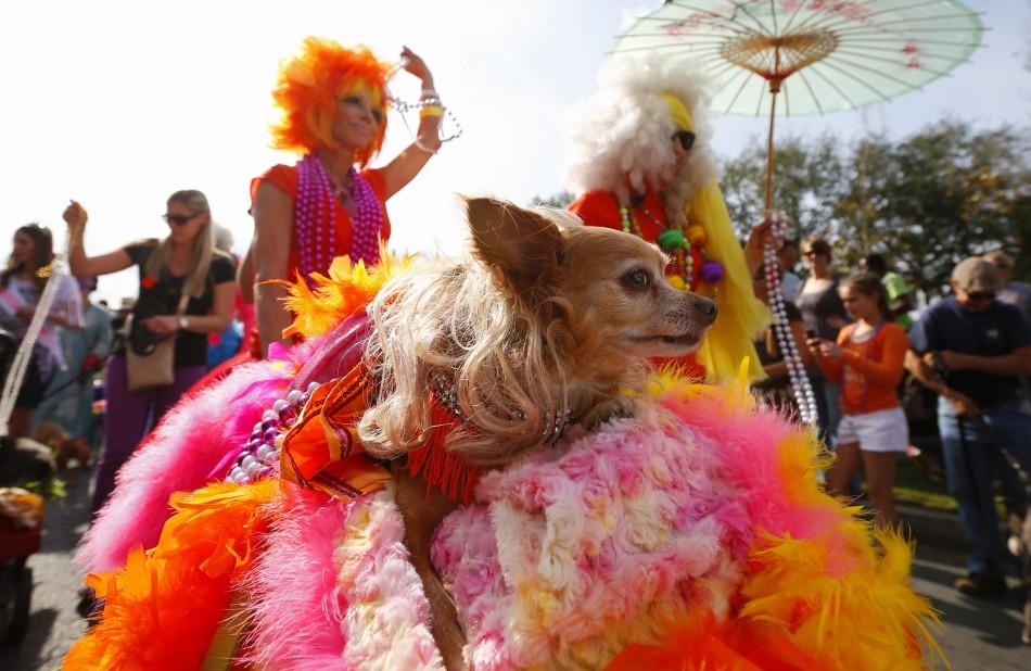 mardi-gras-2013-new-orleans-mobile.jpg