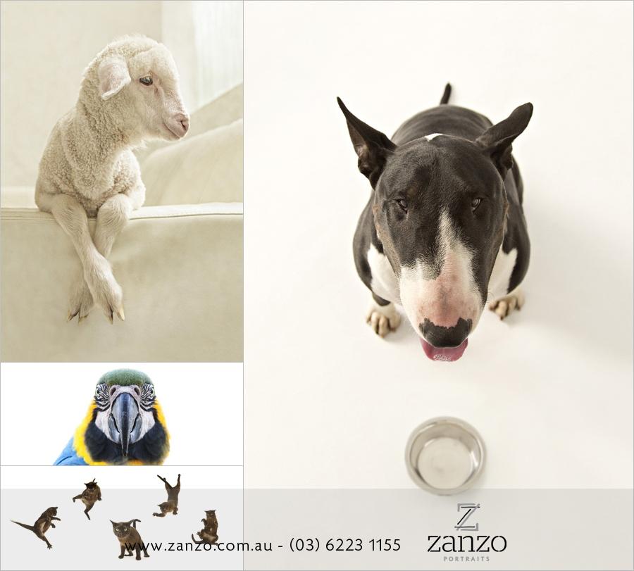 Zanzo_hobart dog photo-hobart family photography-tasmanian pets photos-portraits-award winning-lamb portrait001.JPG