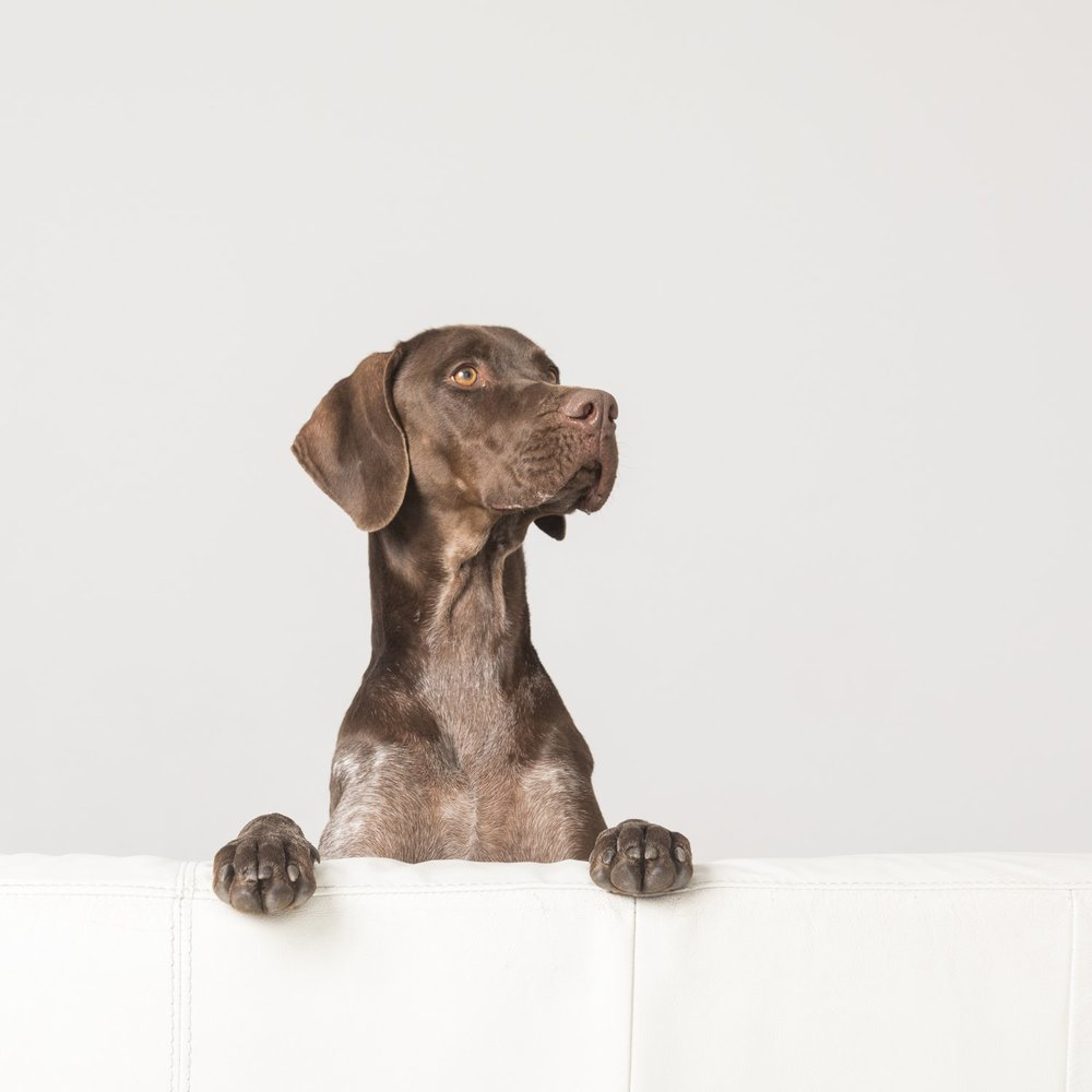 zanzo_portraits_hobart_photographer_tasmania_family_pets_dog_0037.jpg