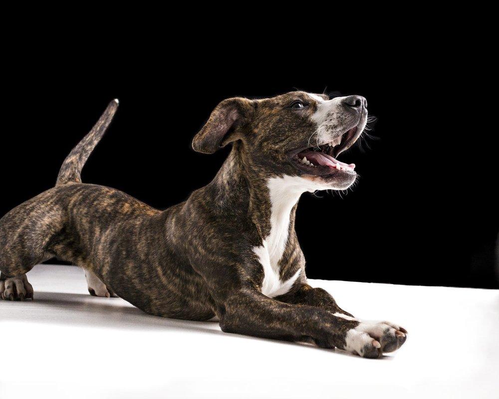 zanzo_portraits_hobart_photographer_tasmania_family_pets_dog_0021.jpg