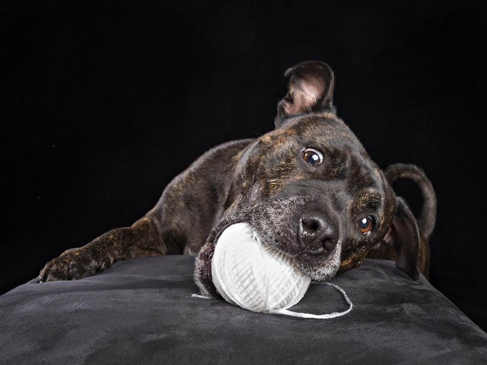 zanzo_portraits_hobart_photographer_tasmania_family_pets_dog_0017.jpg
