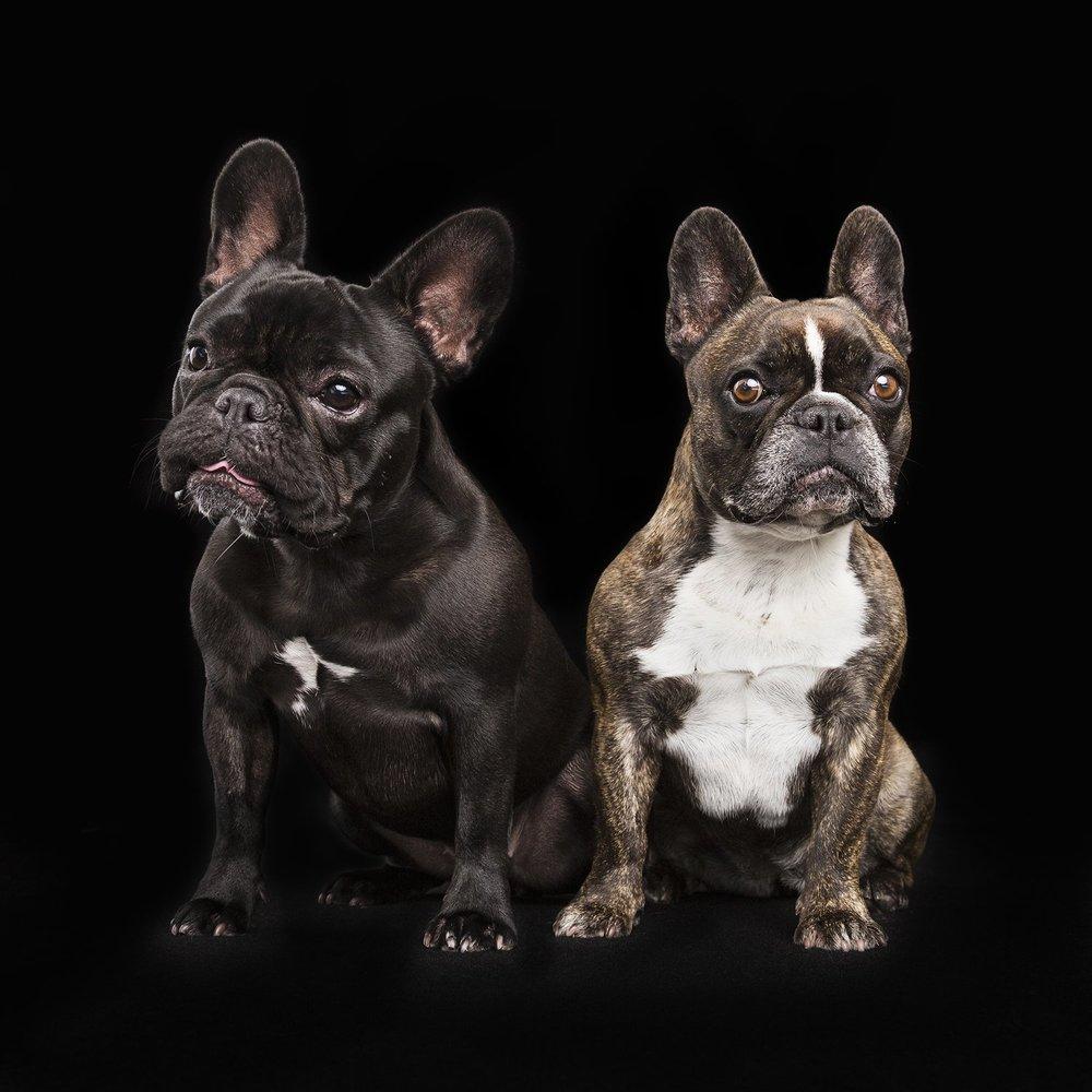 zanzo_portraits_hobart_photographer_tasmania_family_pets_dog_0026.jpg