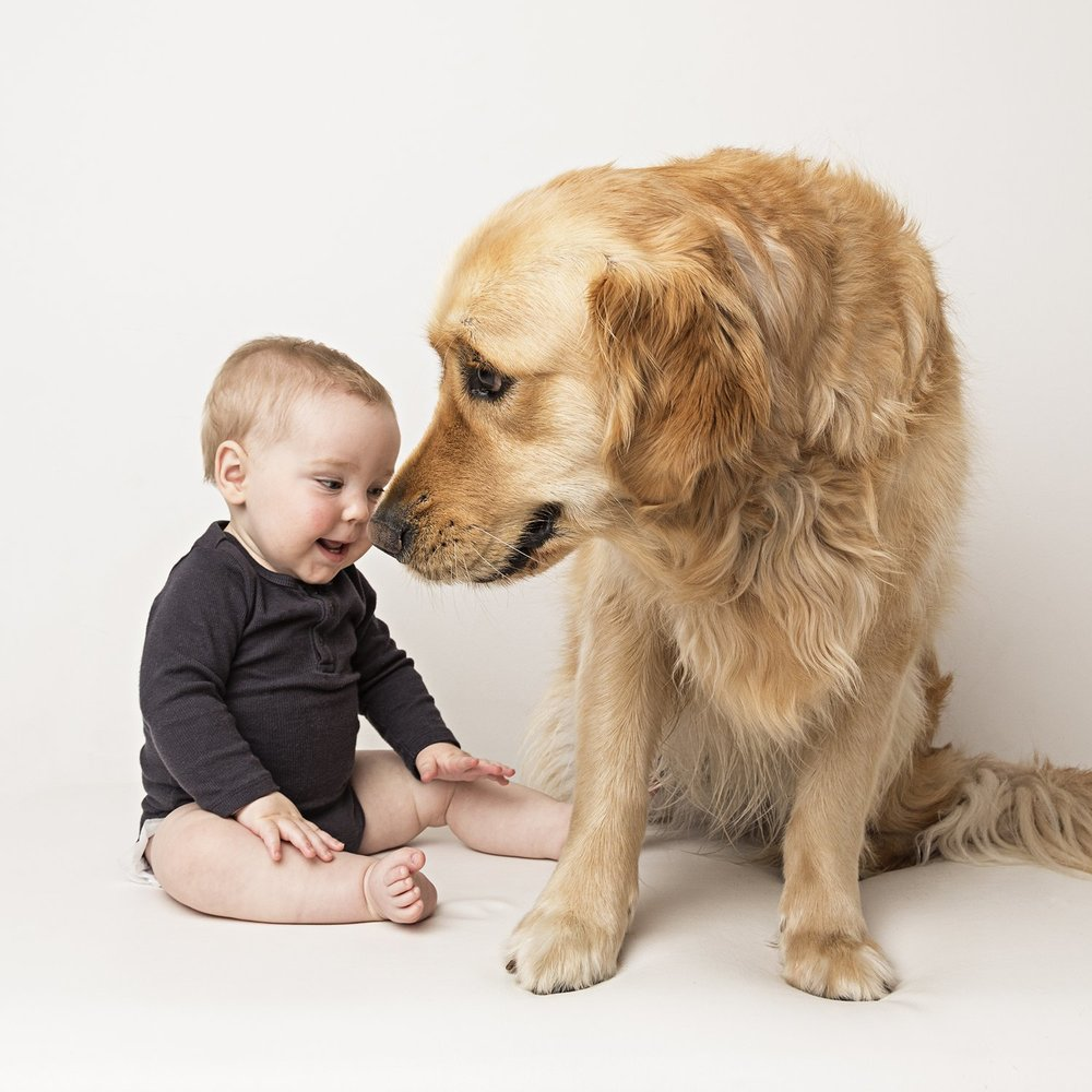 zanzo_portraits_hobart_photographer_tasmania_family_pets_dog_0051.jpg