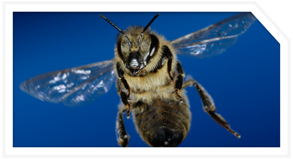 POST_PROJ_bee-exhibit-1.png