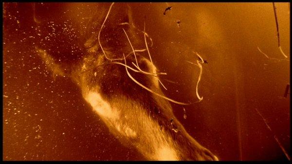 Lars von Trier.  The Element of Crime . 1984.