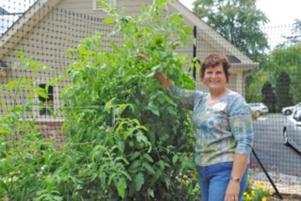 [Nancy Watkins next to a tall tomato plant]