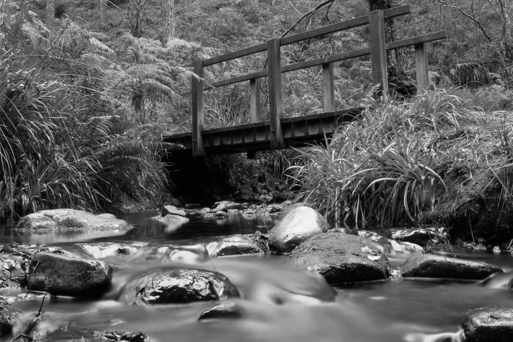 Forest Flow.jpg