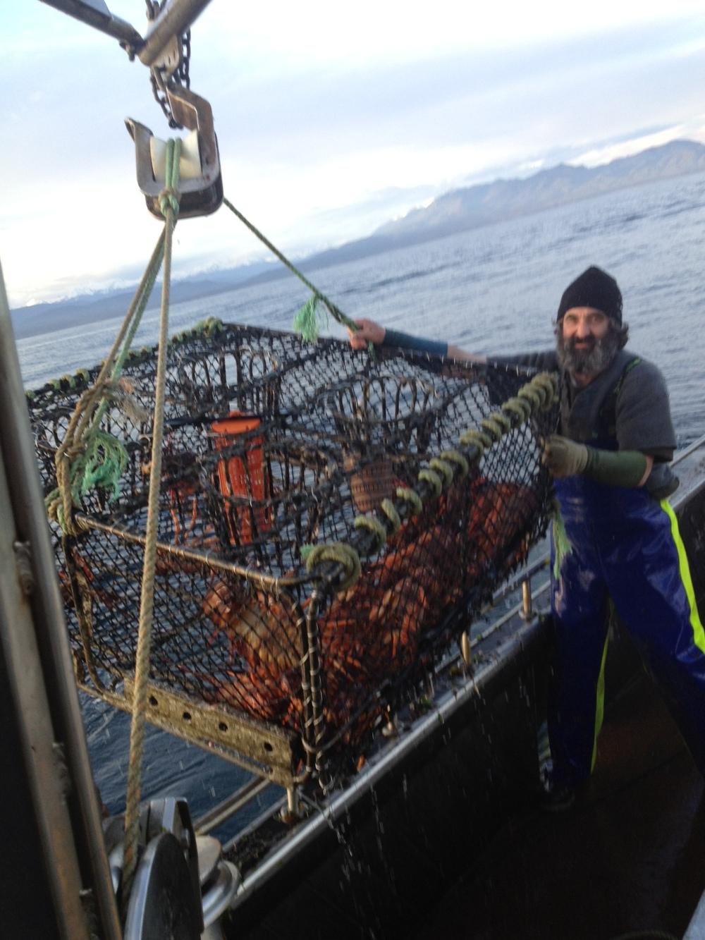 New Zealand Rock Lobster