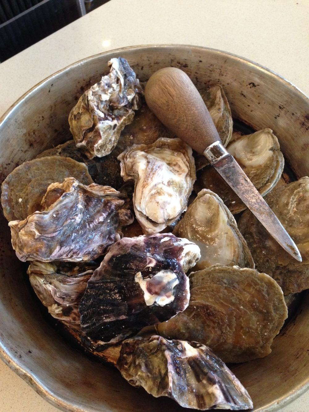 Kaipara & Tio Point Oysters
