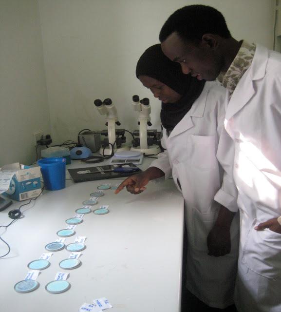 IHI, ifakara health institute, msabi, water quality ifakara, rural tanzania