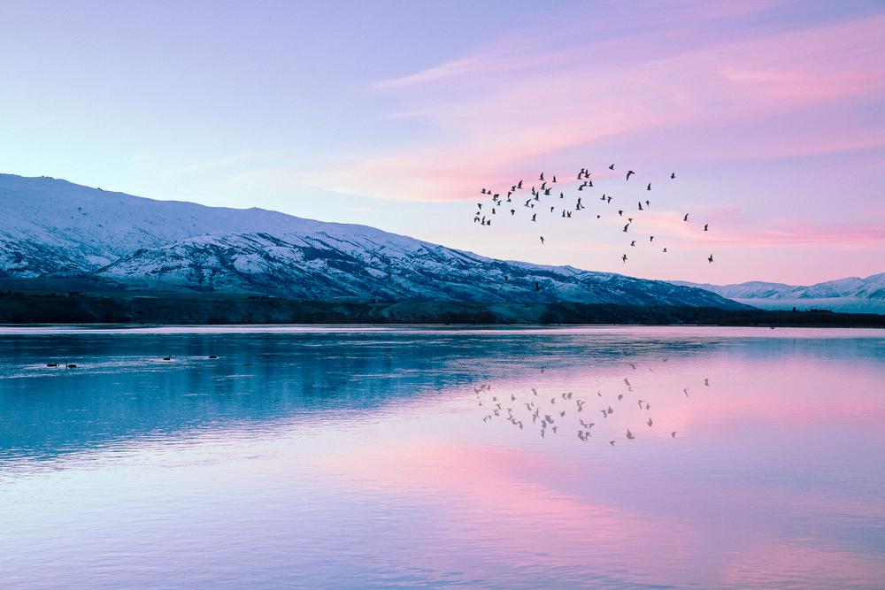 IMG_4486-birds.jpg