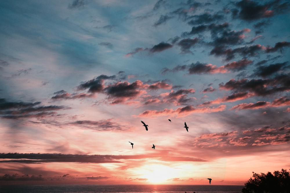 IMG_0705 birds.jpg