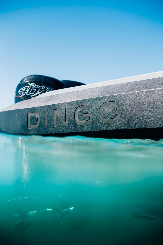 DINGO-CANON5D_175.jpg