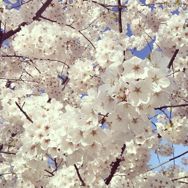 Spring2013_3
