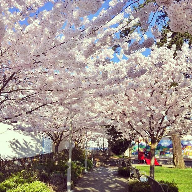 Spring2013_2