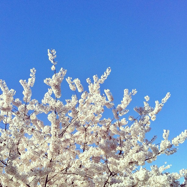 Spring2013_1